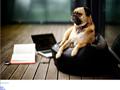 Paseador de Perros | Cuidador de Mascotas Madrid
